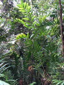In habitat, Colombia